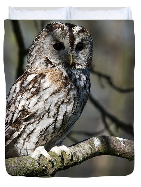 A Tawny Owl  Duvet Cover