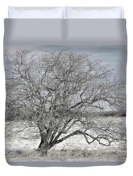 A Tree In Canaan Duvet Cover by Randy Bodkins