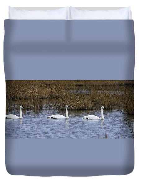 A Trio Of Swans Duvet Cover