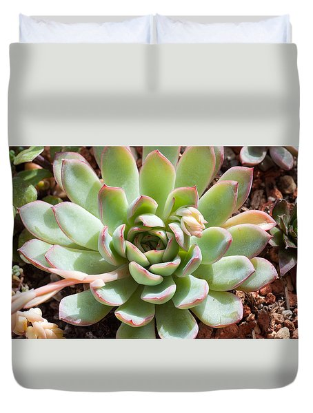 A Young Succulent Plant Duvet Cover by Catherine Lau
