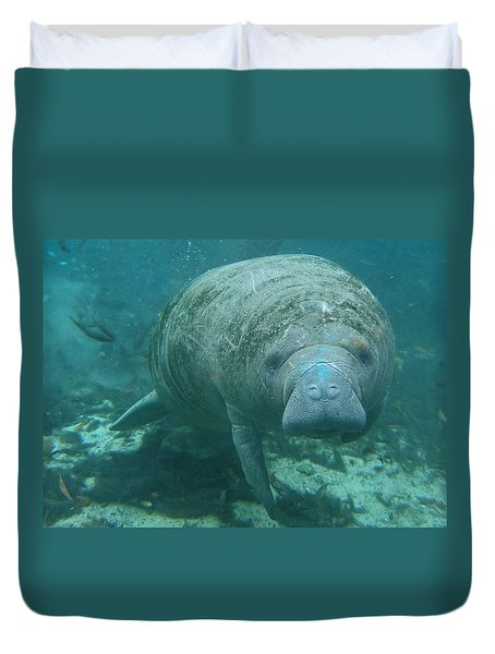 About To Meet A Manatee Duvet Cover by Kimberly Mohlenhoff