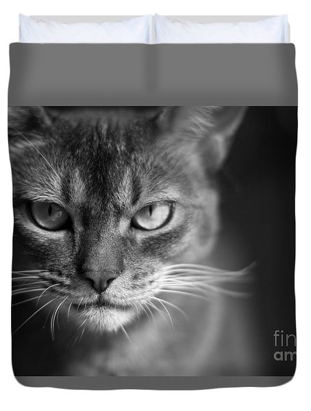 Black Abyssinian Cat Pictures