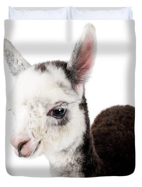Adorable Baby Alpaca Cuteness Duvet Cover by TC Morgan