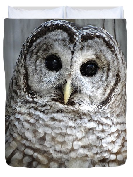 Adorable Barred Owl  Duvet Cover by Rebecca Overton