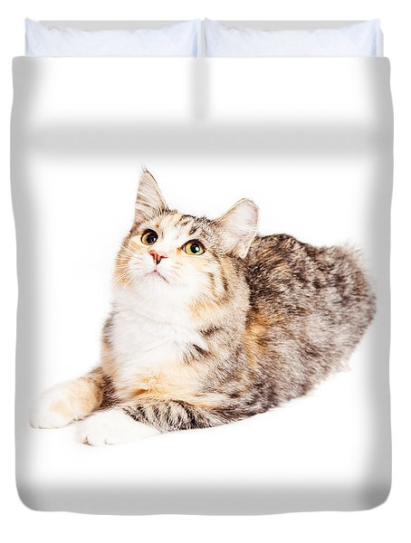 Adorable Calico Kitty Looking Up Duvet Cover