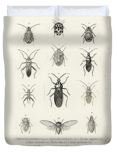 African Bugs And Insects Duvet Cover