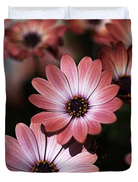 African Daisy Zion Red Duvet Cover by Joy Watson