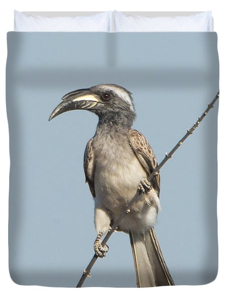 African Grey Hornbill Tockus Nasutus Duvet Cover by Panoramic Images