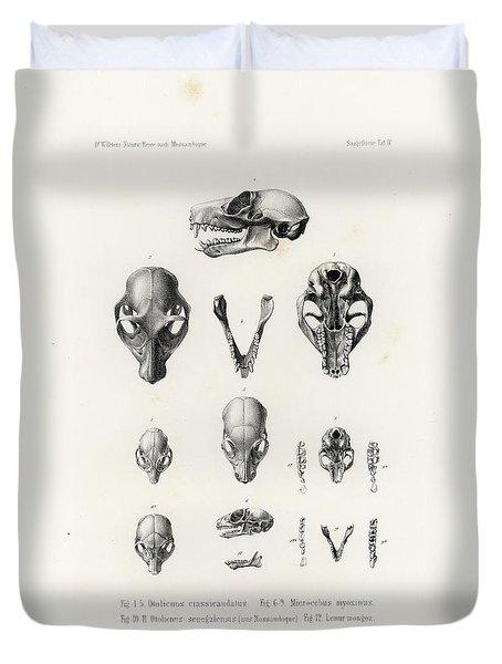 African Mammal Skulls Duvet Cover