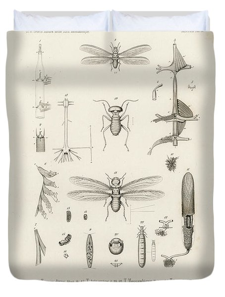 African Termites And Their Anatomy Duvet Cover