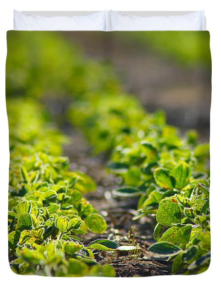 Agriculture- Soybeans 1 Duvet Cover