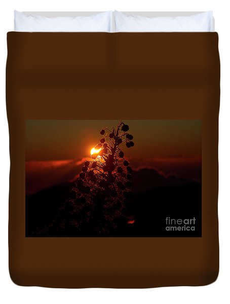 Ahinahina - Silversword - Argyroxiphium Sandwicense - Sunrise Duvet Cover by Sharon Mau