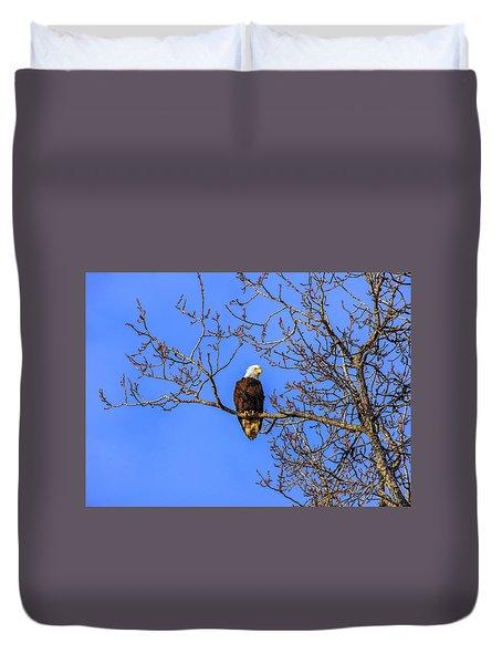 Alaskan Bald Eagle In Tree At Sunset Duvet Cover