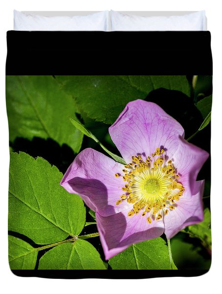 Duvet Cover featuring the photograph Alberta Wild Rose Opens For Early Sun by Darcy Michaelchuk