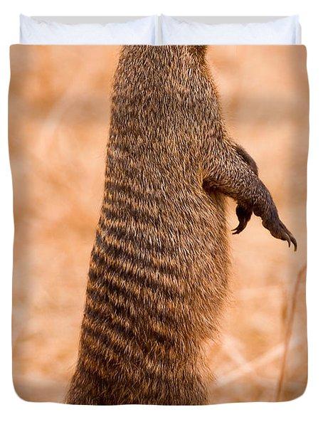 Alert Mongoose Duvet Cover by Adam Romanowicz