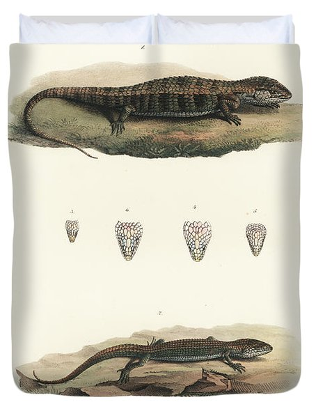Alligator Lizards From Mexico Duvet Cover