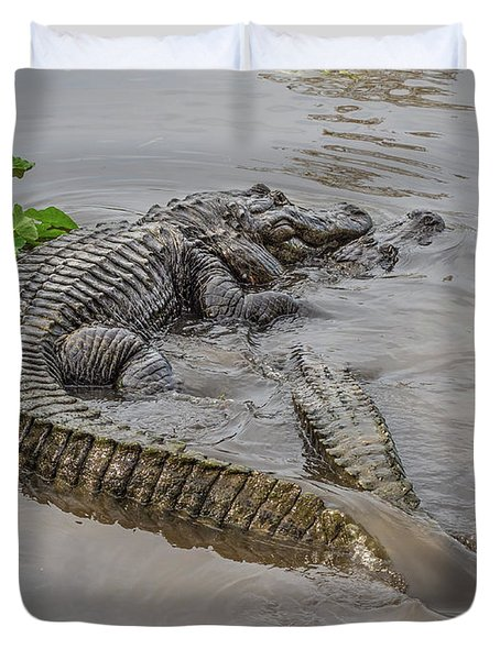 Alligators Courting Duvet Cover