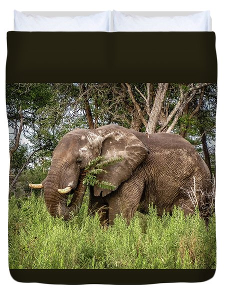 Duvet Cover featuring the photograph Alpha Male Elephant by Gregory Daley  PPSA