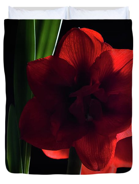 Amaryllis Bloom Duvet Cover
