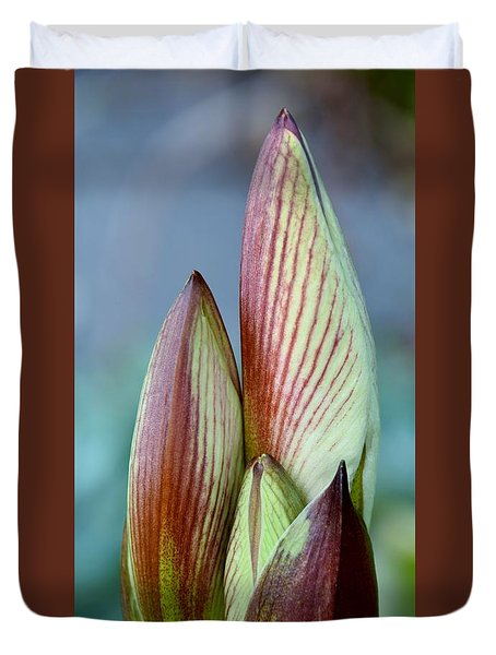 Duvet Cover featuring the photograph Amaryllis Buds by Werner Lehmann