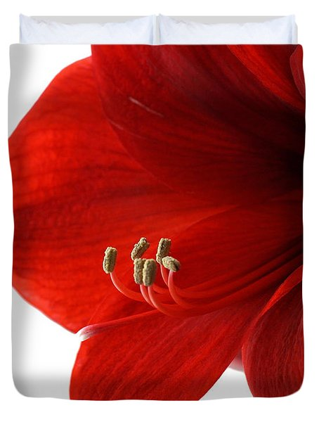 Amaryllis On White 3 Duvet Cover