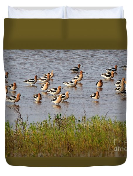 American Avocets Duvet Cover