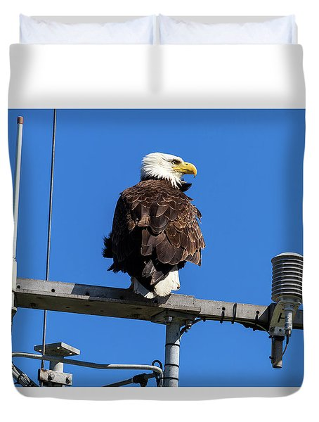 American Bald Eagle On Communication Tower Duvet Cover by David Gn