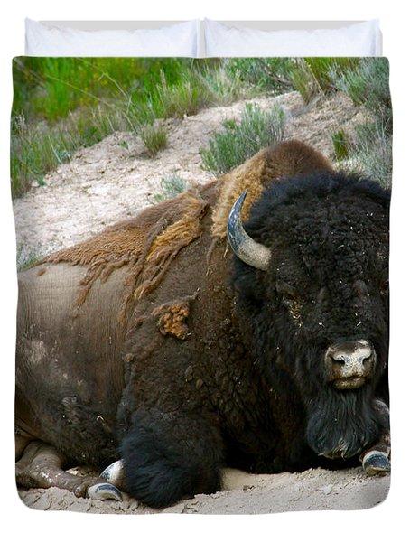 American Bison Duvet Cover by Karon Melillo DeVega