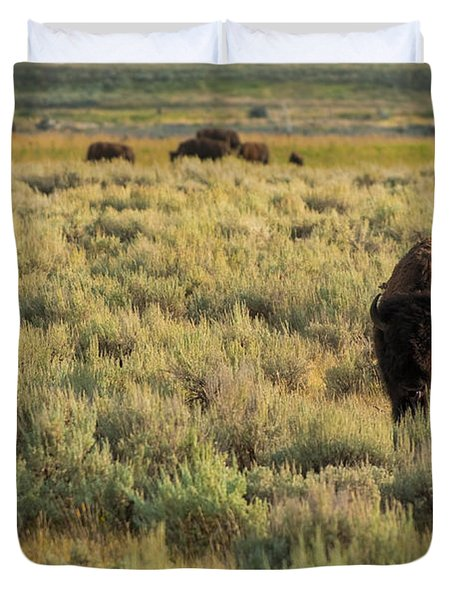 American Bison Duvet Cover by Sebastian Musial
