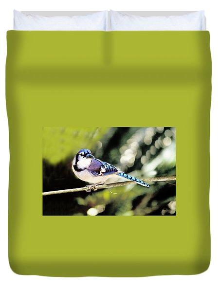 American Blue Jay On Alert Duvet Cover