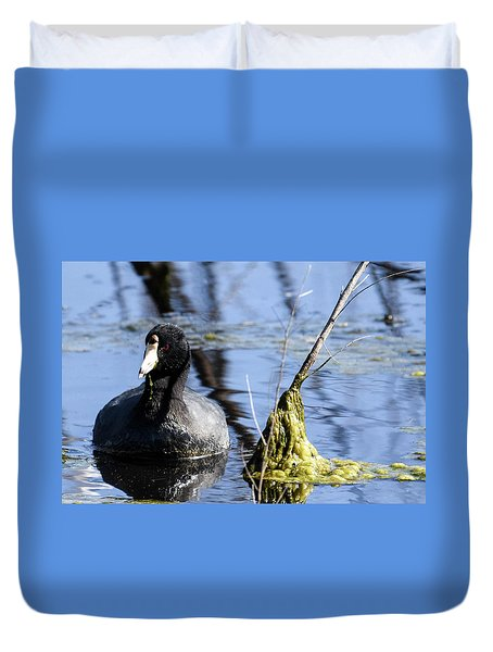 Duvet Cover featuring the photograph American Coot by Gary Wightman