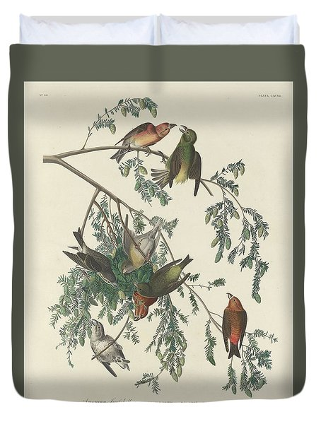 American Crossbill Duvet Cover by Rob Dreyer