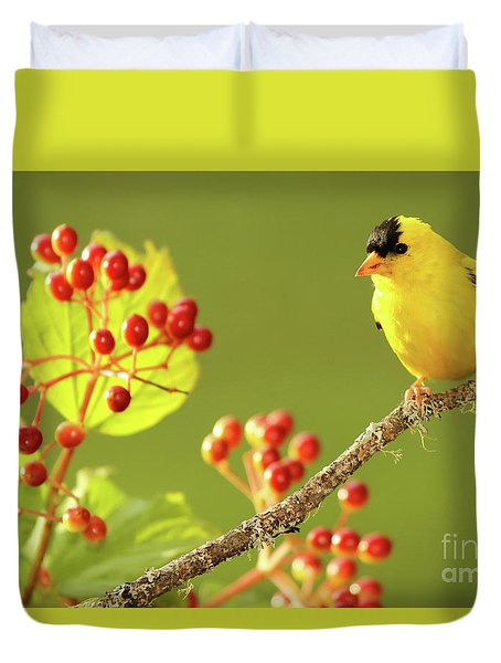 American Goldfinch Among Red Berries Duvet Cover