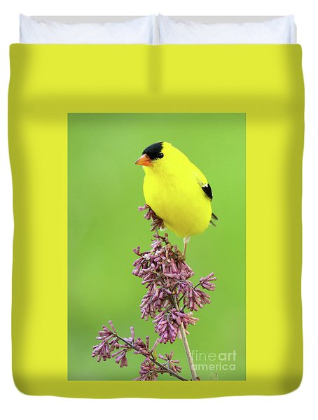 Duvet Cover featuring the photograph American Goldfinch Atop Purple Flowers by Max Allen