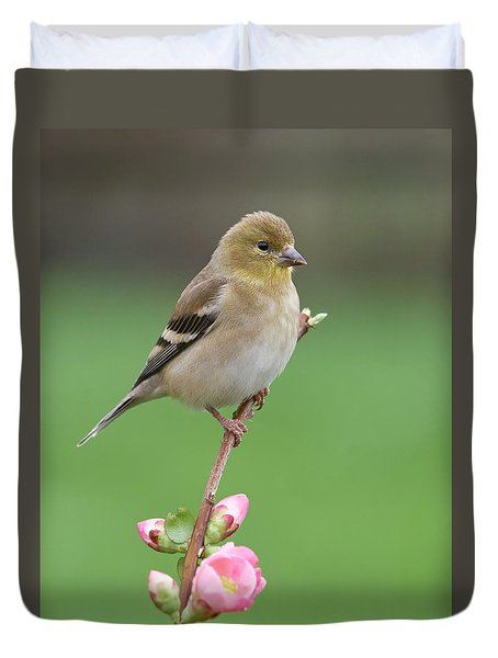 American Goldfinch Duvet Cover by Doug Herr