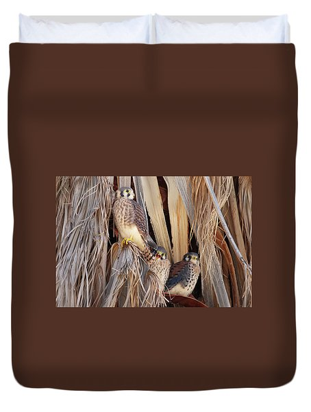 American Kestrels Duvet Cover by Dan Redmon