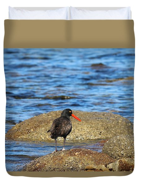Duvet Cover featuring the photograph American Oystercatcher  by Christy Pooschke