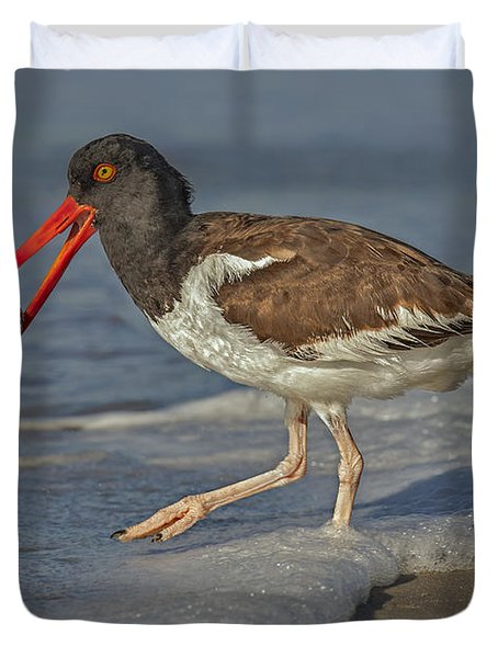 American Oystercatcher Grabs Breakfast Duvet Cover by Susan Candelario