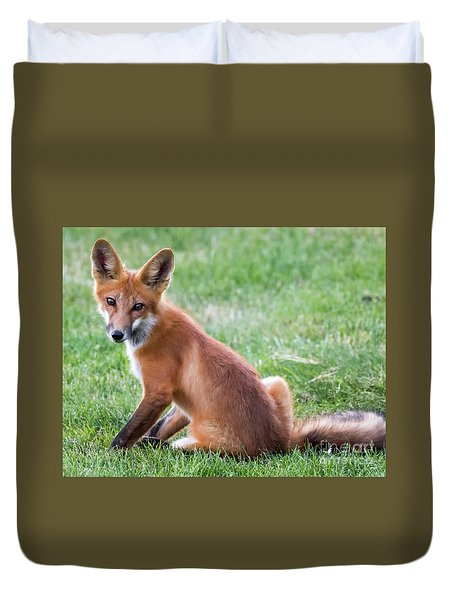 American Red Fox  Duvet Cover