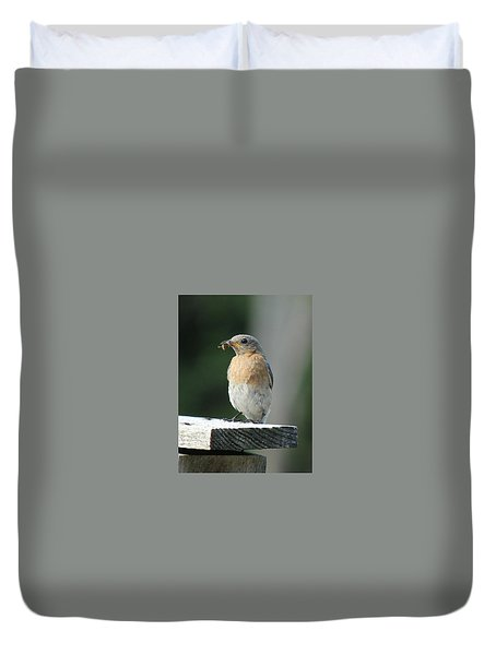 Duvet Cover featuring the photograph American Robin by Charles and Melisa Morrison