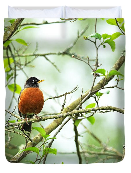 American Robin On Tree Branch Duvet Cover
