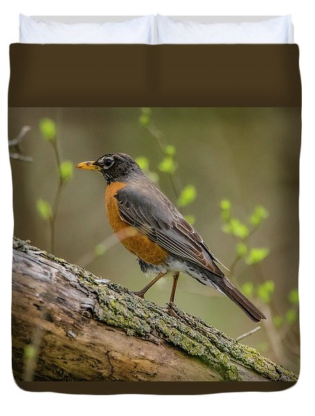 American Robin Duvet Cover by Ray Congrove