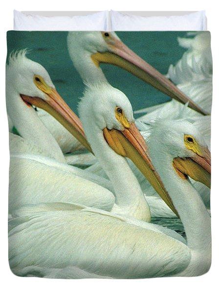 American White Pelicans Duvet Cover