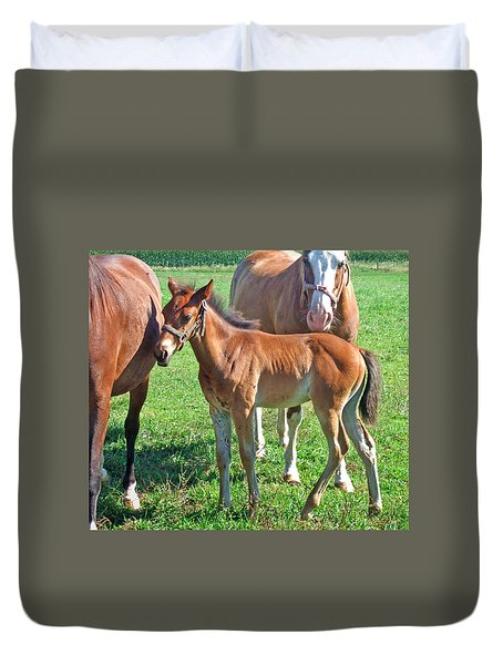 Amish Pony Duvet Cover