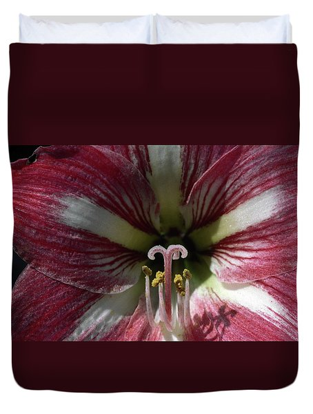 Amaryllis Flower Close-up Duvet Cover by Sally Weigand
