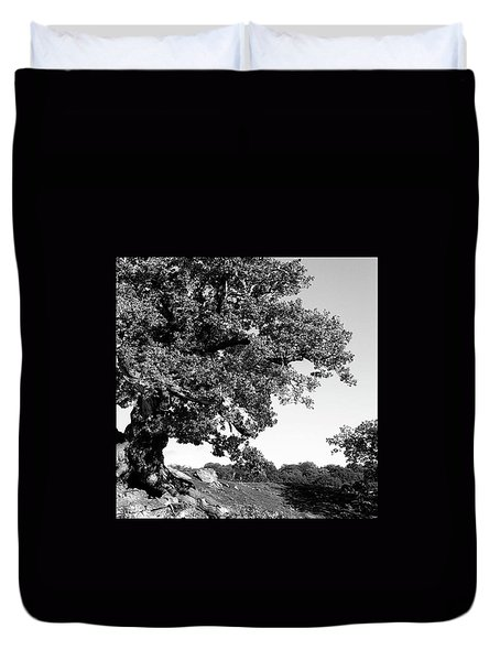Ancient Oak, Bradgate Park Duvet Cover by John Edwards