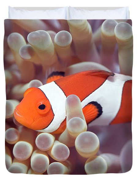 Anemone And Clown-fish Duvet Cover by MotHaiBaPhoto Prints