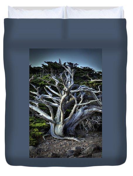 Ansel's Cypress Duvet Cover