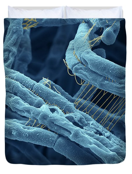 Anthrax Bacteria Sem Duvet Cover by Eye Of Science and Photo Researchers