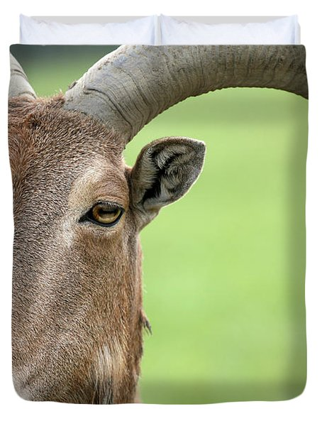 Aoudad Duvet Cover by Karol Livote